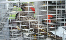 Woodpeckers Removal